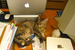 Lucy the cat asleep on my desk in Rebecca's home office, a near daily occurrence